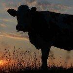 Office, historique de la vache à lait de Microsoft