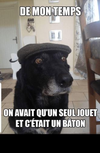 chien bâton drôle