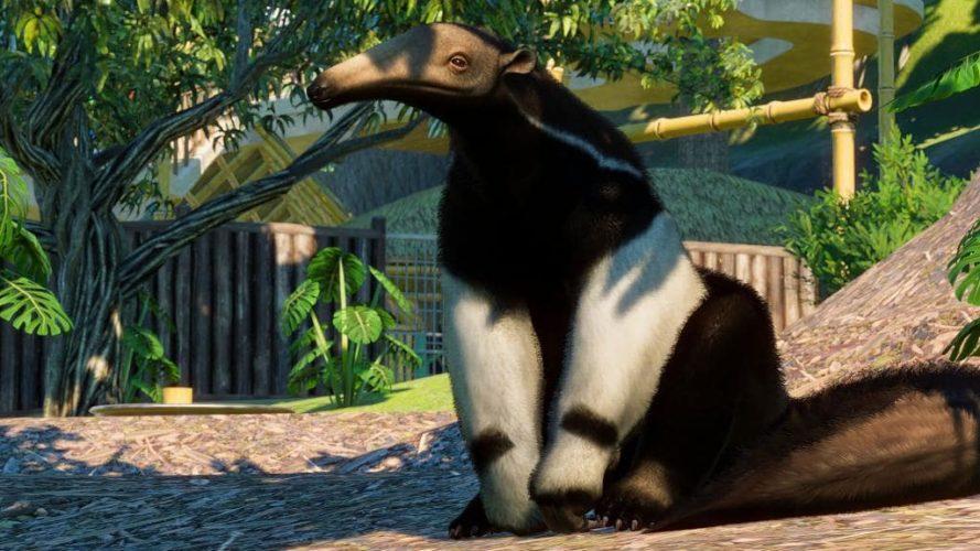Image du tamanoir disponible dans le DLC Amérique du Sud de Planet Zoo