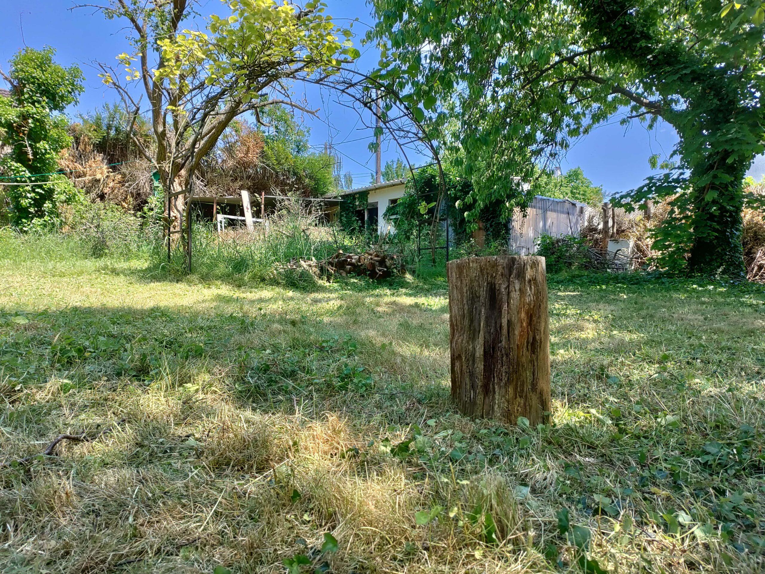 Test photo OnePlus Nord CE 5G jardin