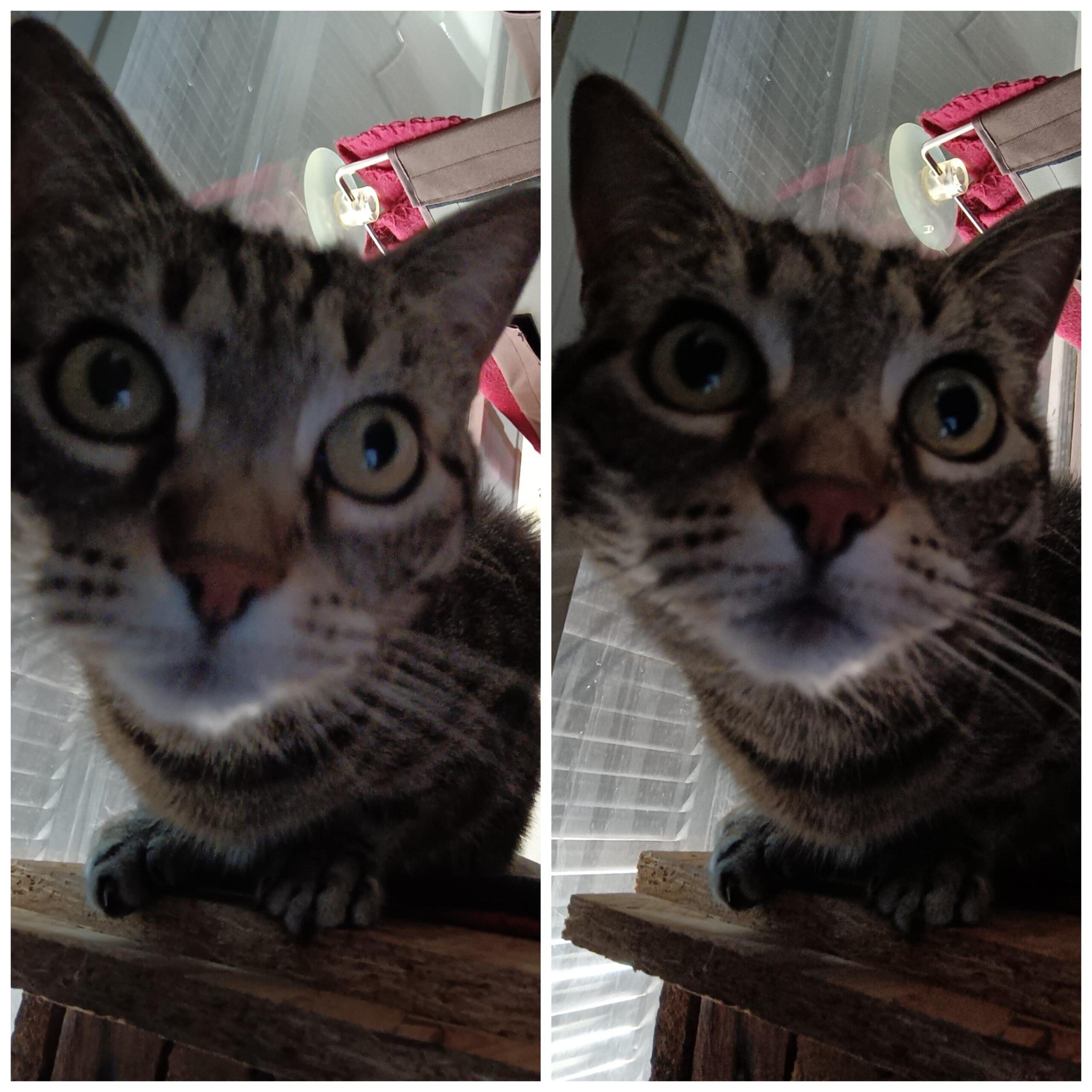 Selfie Lily